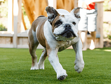 Artificial Turf Solutions for Pets