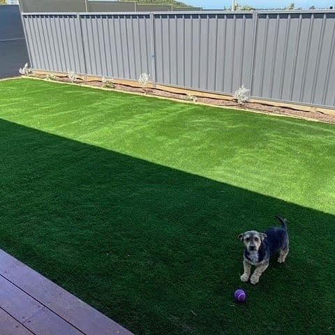 "Clearly this puppy cannot wait to play in this brand new backyard, and we get why ! 🥎  🐾 Synthetic turf is a good solution for pet owners: no more muddy paws in your home even after playing !  💡 One of our preferred pet system includes our Pet Fresh infill : its natural formula helps reducing odour associated with our 4 legged friends daily business.   Here, Chris installed by himself our super soft and all-green Highland Green. And it's nicely done ! 💪  🐶 ""So... Can you throw the ball now ?"""